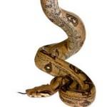 un-serpent-seme-la-panique-dans-un-avion_110657_w250