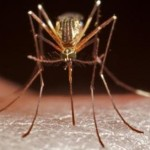La recherche accélérée pour un vaccin reste la meilleure solution pour une lutte efficace à long terme contre le paludisme transmis par ce genre de moustique.