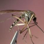 Des chercheurs américains ont identifié des molécules qui inhibent l'odorat des insectes suceurs de sang.