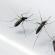 Lutte contre le paludisme au Burkina: environ 610. 293 cas de moins qu'en 2014