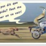 Panthère et moto