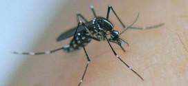Ce qu'il faut savoir sur l'épidémie du virus Zika