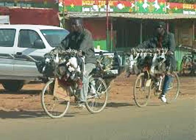 Poulets -bicyclettes