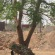 Le premier ministre ZIDA déclenche la transformation du terrain de l'ex-camp fonctionnaire en parking à Ouaga.
