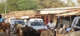 L'élévage,3è produit d'exportation du Burkina Faso