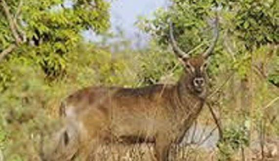 Ouverture de la chasse au Burkina du 1er décembre 2017 au 31 mai 2018 avec des exceptions sécuritaires et autres