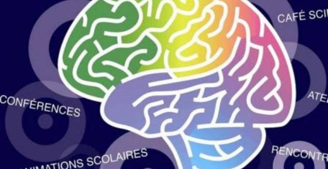 La pauvreté a-t-elle une incidence sur le développement du cerveau?