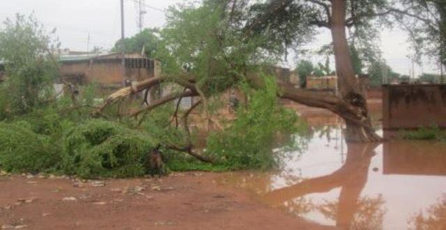 Orage du 2 Mai 2017:des arbres déracinés et cassés à Ouagadougou
