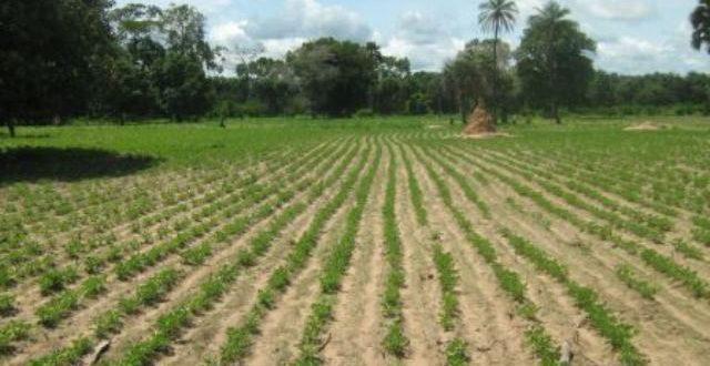 Le Nigeria veut abandonner la production d'engrais chimiques pour une agriculture bio