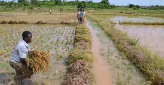La Côte d'Ivoire déclare la guerre aux pesticides frauduleux